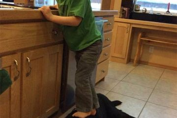 Sarah Palin Dog, Sarah Palin Son Stands On Dog, Social Media Outrage